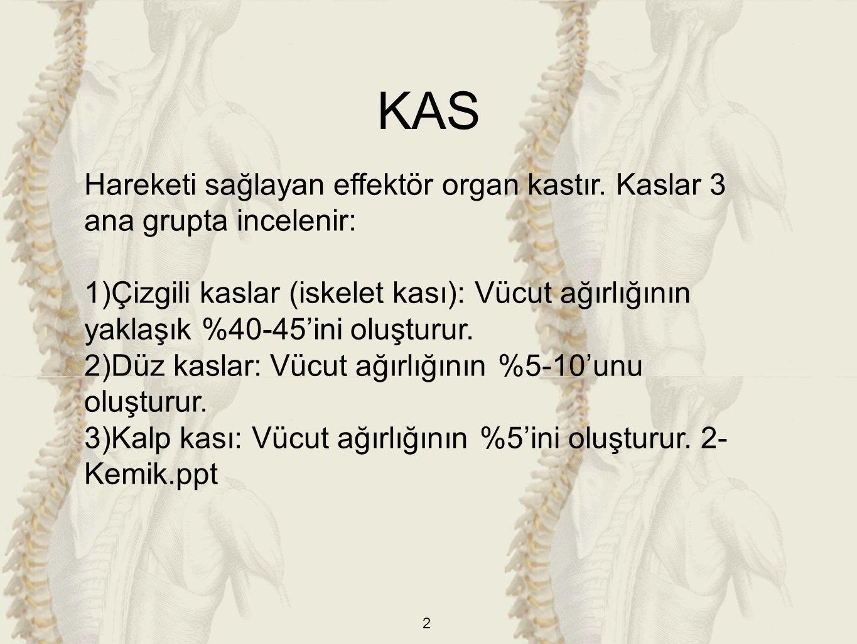 2 Hareketi sağlayan effektör organ kastır.