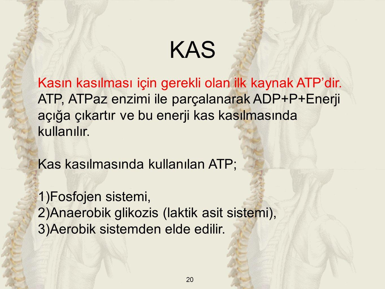 20 Kasın kasılması için gerekli olan ilk kaynak ATP'dir.