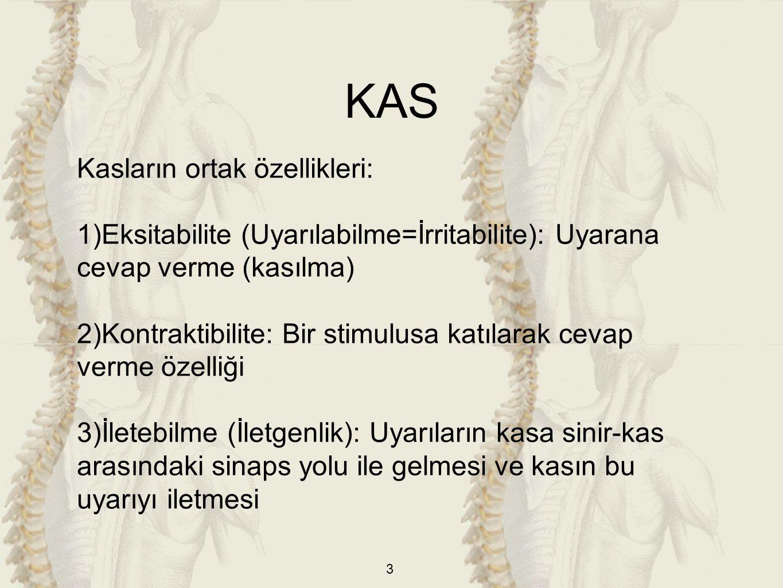 3 Kasların ortak özellikleri: 1)Eksitabilite (Uyarılabilme=İrritabilite): Uyarana cevap verme (kasılma) 2)Kontraktibilite: Bir stimulusa katılarak cevap verme özelliği 3)İletebilme (İletgenlik): Uyarıların kasa sinir-kas arasındaki sinaps yolu ile gelmesi ve kasın bu uyarıyı iletmesi KAS