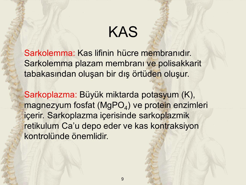9 Sarkolemma: Kas lifinin hücre membranıdır.