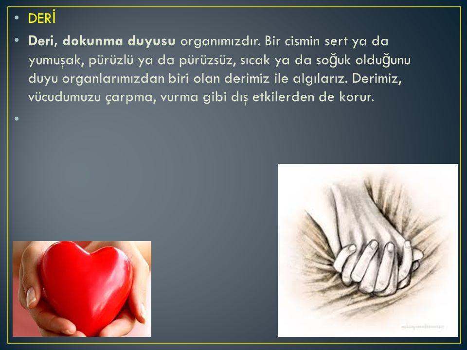 DER İ Deri, dokunma duyusu organımızdır.