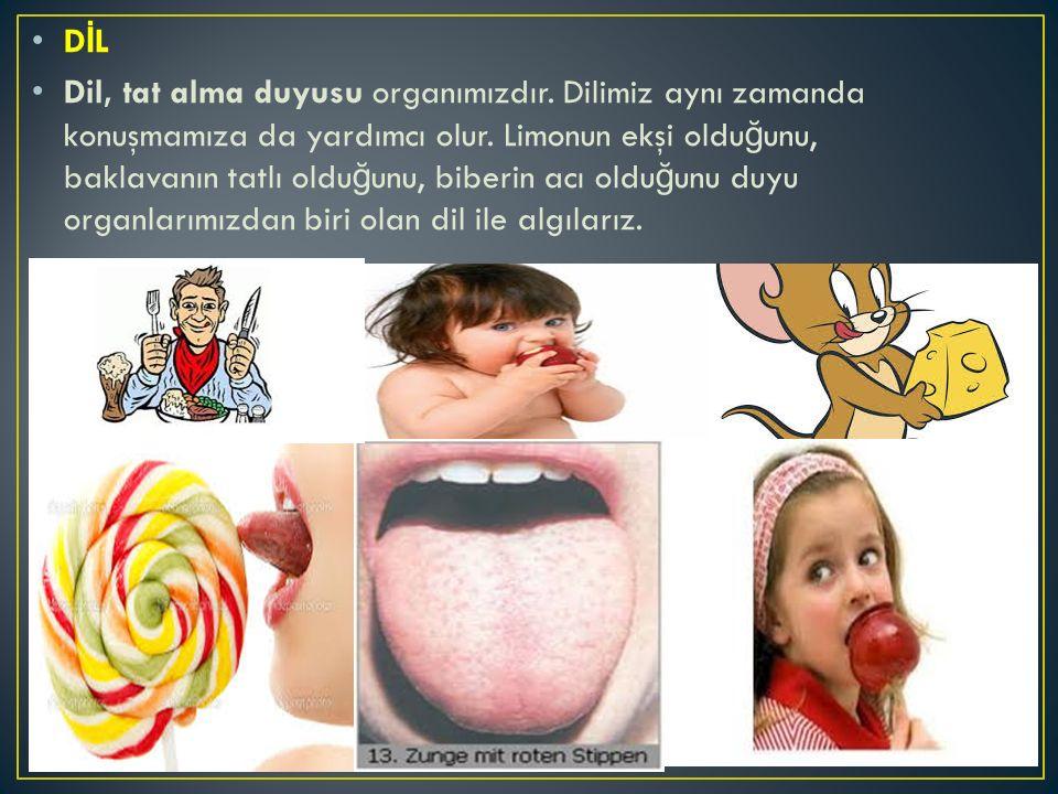 D İ L Dil, tat alma duyusu organımızdır. Dilimiz aynı zamanda konuşmamıza da yardımcı olur. Limonun ekşi oldu ğ unu, baklavanın tatlı oldu ğ unu, bibe
