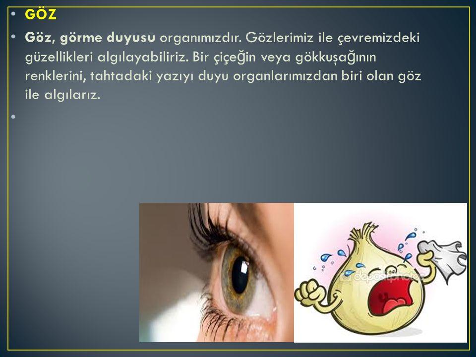 GÖZ Göz, görme duyusu organımızdır. Gözlerimiz ile çevremizdeki güzellikleri algılayabiliriz. Bir çiçe ğ in veya gökkuşa ğ ının renklerini, tahtadaki