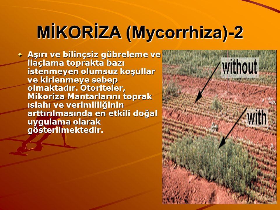 MİKORİZA (Mycorrhiza)-2 Aşırı ve bilinçsiz gübreleme ve ilaçlama toprakta bazı istenmeyen olumsuz koşullar ve kirlenmeye sebep olmaktadır. Otoriteler,