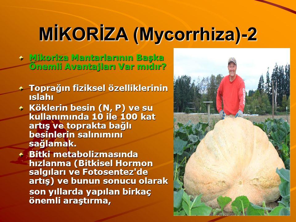 MİKORİZA (Mycorrhiza)-2 Mikoriza Mantarlarının Başka Önemli Avantajları Var mıdır? Toprağın fiziksel özelliklerinin ıslahı Köklerin besin (N, P) ve su