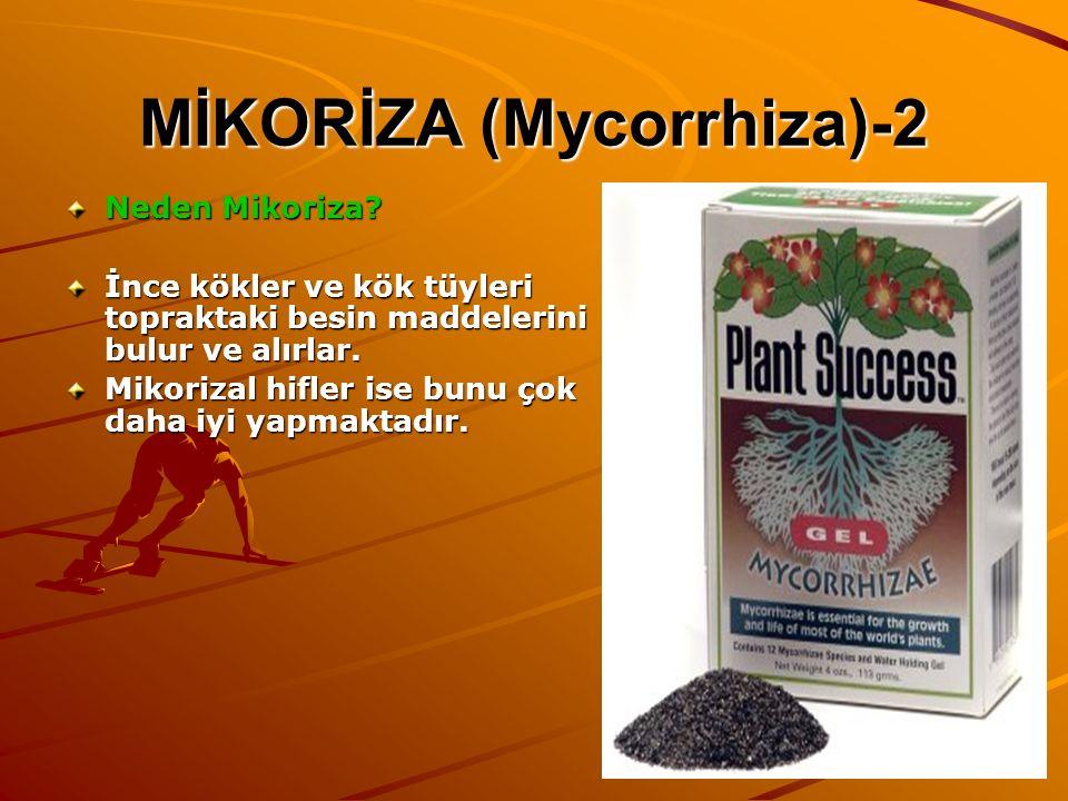 MİKORİZA (Mycorrhiza)-2 Neden Mikoriza? İnce kökler ve kök tüyleri topraktaki besin maddelerini bulur ve alırlar. Mikorizal hifler ise bunu çok daha i