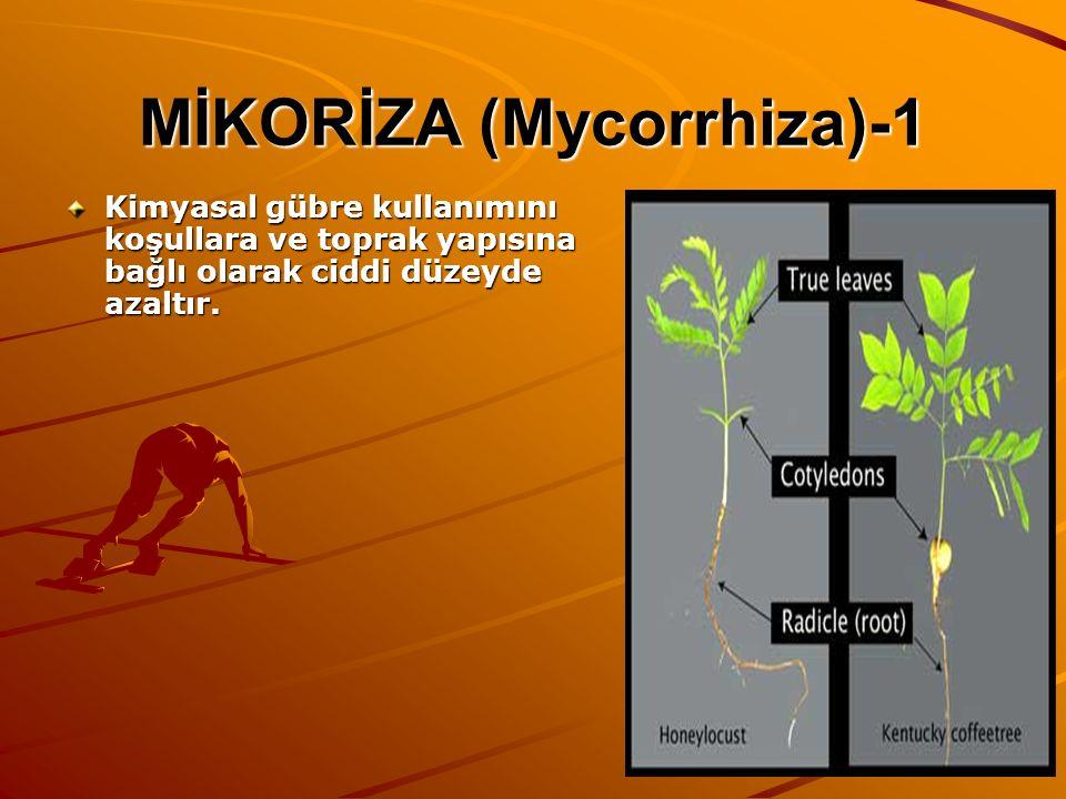 MİKORİZA (Mycorrhiza)-1 Kimyasal gübre kullanımını koşullara ve toprak yapısına bağlı olarak ciddi düzeyde azaltır.