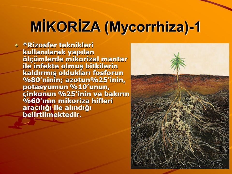 MİKORİZA (Mycorrhiza)-1 *Rizosfer teknikleri kullanılarak yapılan ölçümlerde mikorizal mantar ile infekte olmuş bitkilerin kaldırmış oldukları fosforu