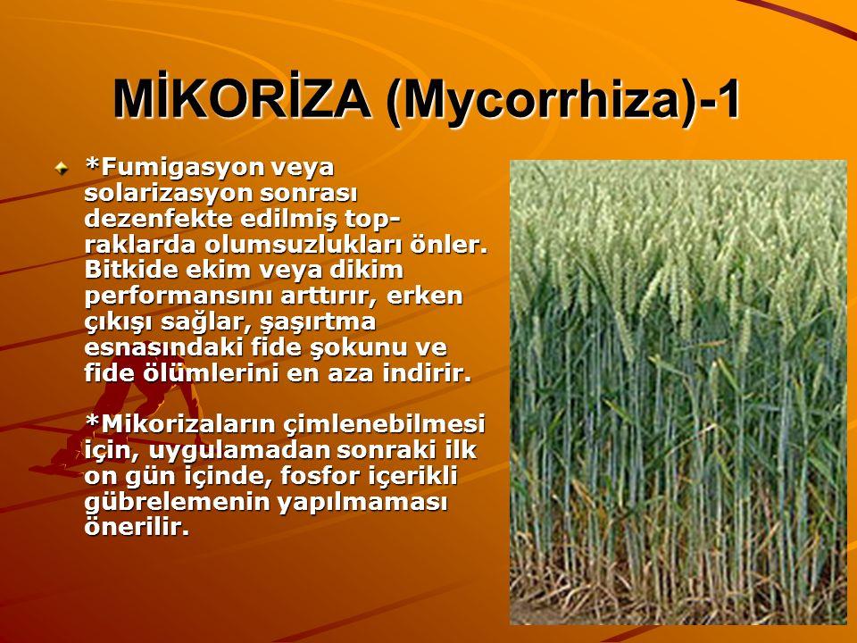 MİKORİZA (Mycorrhiza)-1 *Fumigasyon veya solarizasyon sonrası dezenfekte edilmiş top- raklarda olumsuzlukları önler. Bitkide ekim veya dikim performan