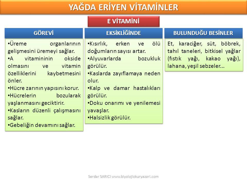 Et, karaciğer, süt, böbrek, tahıl taneleri, bitkisel yağlar (fıstık yağı, kakao yağı), lahana, yeşil sebzeler... Üreme organlarının gelişmesini üremey
