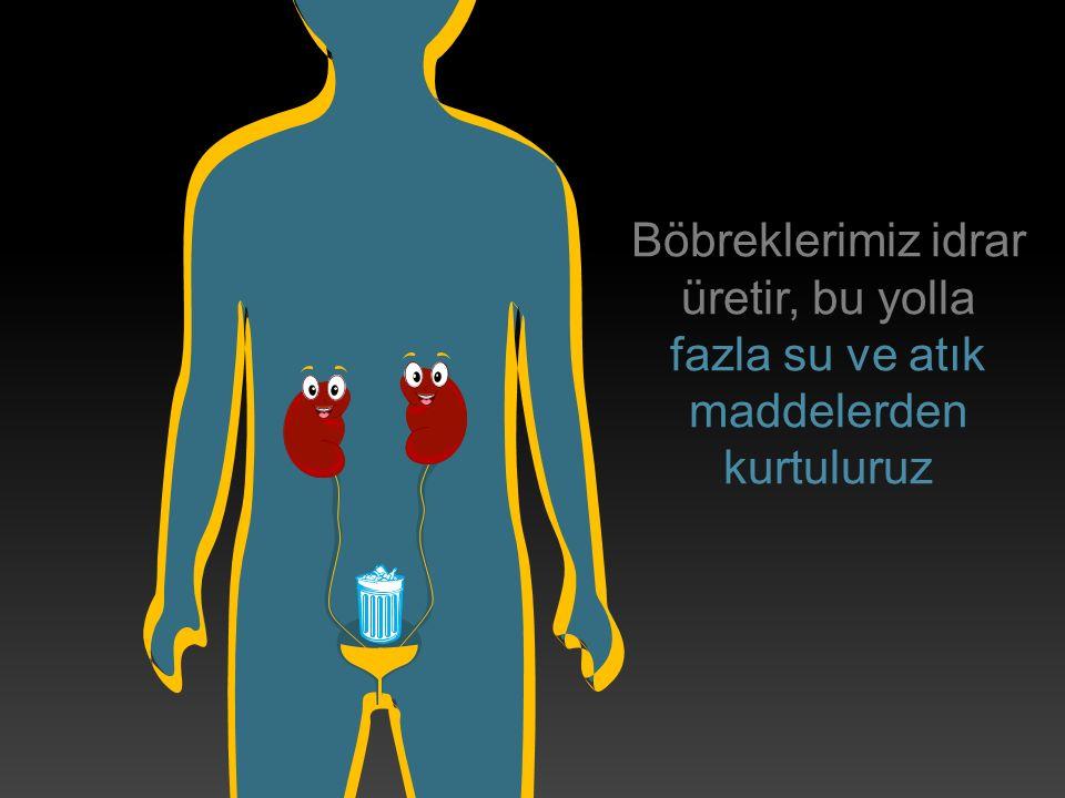 Vücudumuzdaki su miktarını kontrol eder