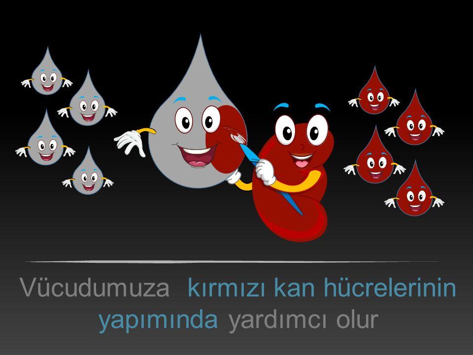 Vücudumuza kırmızı kan hücrelerinin yapımında yardımcı olur