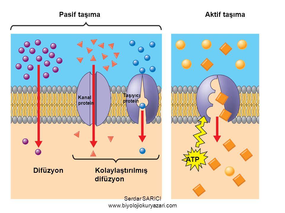 Pasif taşıma Aktif taşıma Difüzyon Kolaylaştırılmış difüzyon ATP Kanal protein Taşıyıcı protein Serdar SARICI www.biyolojiokuryazari.com