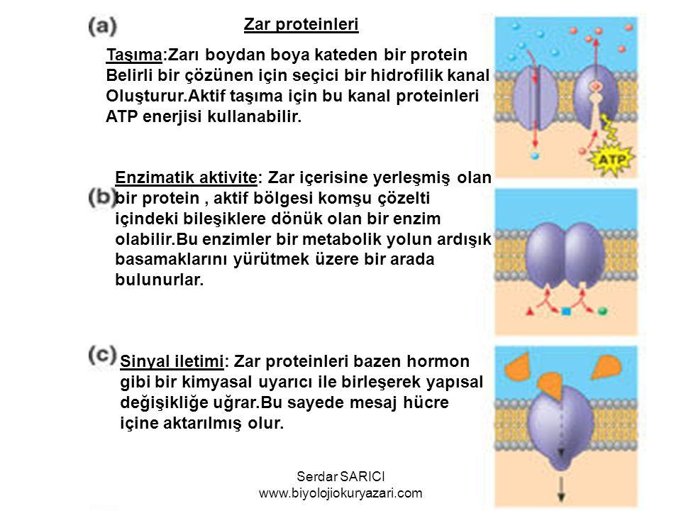 Zar proteinleri Taşıma:Zarı boydan boya kateden bir protein Belirli bir çözünen için seçici bir hidrofilik kanal Oluşturur.Aktif taşıma için bu kanal