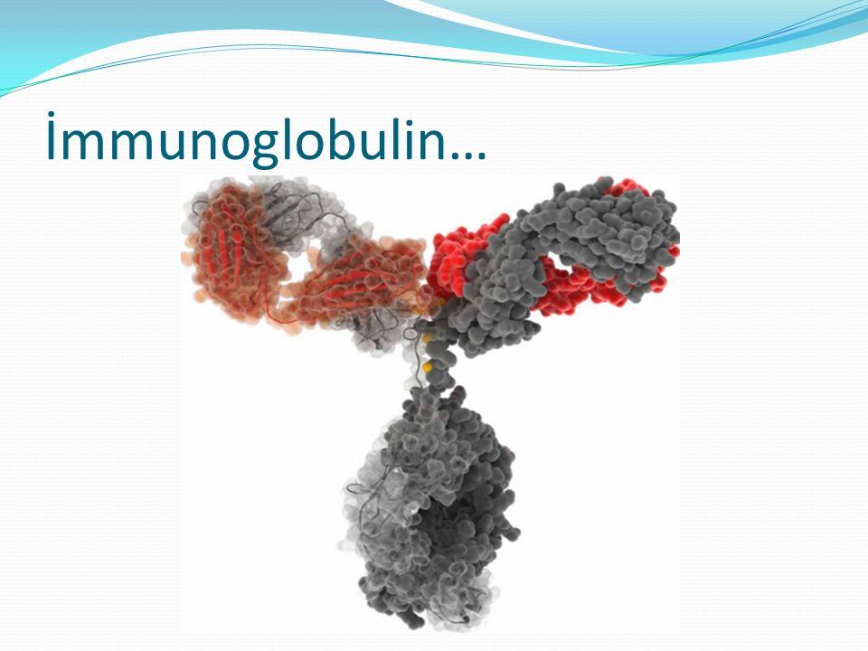 İmmunoglobulin…