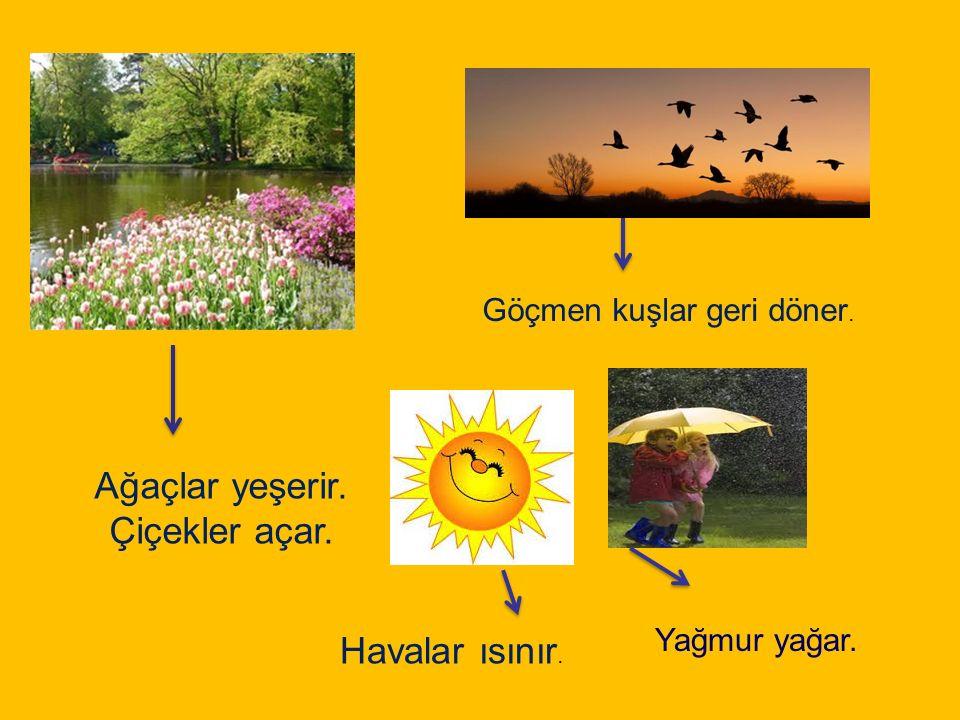 Ağaçlar yeşerir. Çiçekler açar. Göçmen kuşlar geri döner. Havalar ısınır. Yağmur yağar.