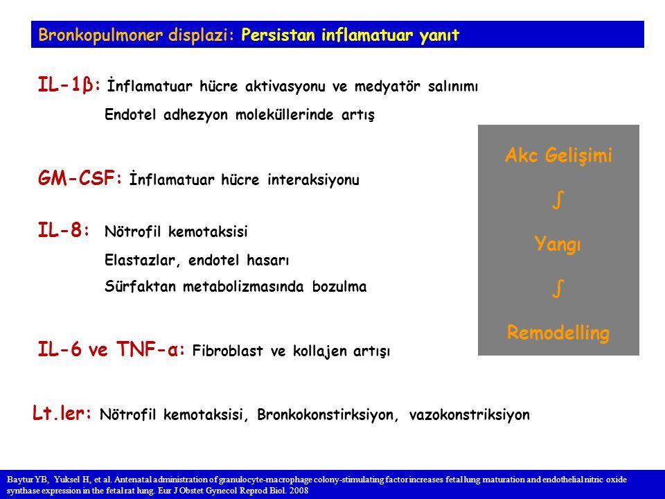 Bronkopulmoner displazi: Persistan inflamatuar yanıt IL-1β: İnflamatuar hücre aktivasyonu ve medyatör salınımı Endotel adhezyon moleküllerinde artış GM-CSF: İnflamatuar hücre interaksiyonu IL-8: Nötrofil kemotaksisi Elastazlar, endotel hasarı Sürfaktan metabolizmasında bozulma IL-6 ve TNF-α: Fibroblast ve kollajen artışı Lt.ler: Nötrofil kemotaksisi, Bronkokonstirksiyon, vazokonstriksiyon Baytur YB, Yuksel H, et al.