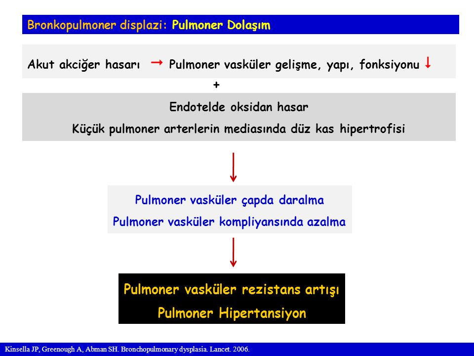 Bronkopulmoner displazi: Pulmoner Dolaşım Akut akciğer hasarı  Pulmoner vasküler gelişme, yapı, fonksiyonu  Kinsella JP, Greenough A, Abman SH.