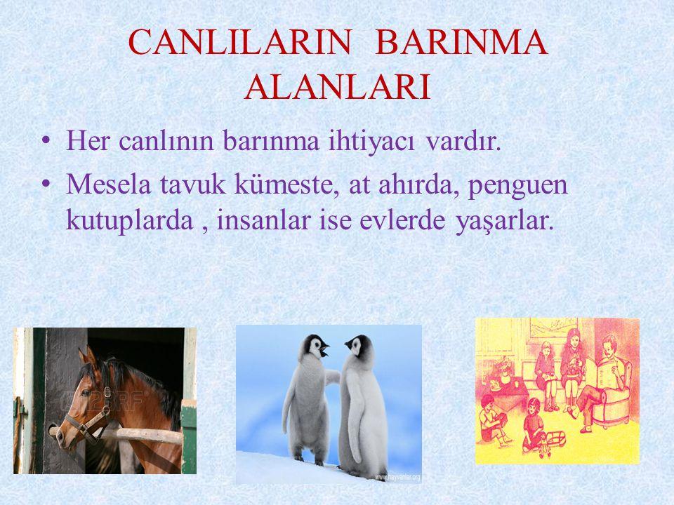 CANLILARIN BARINMA ALANLARI Her canlının barınma ihtiyacı vardır.
