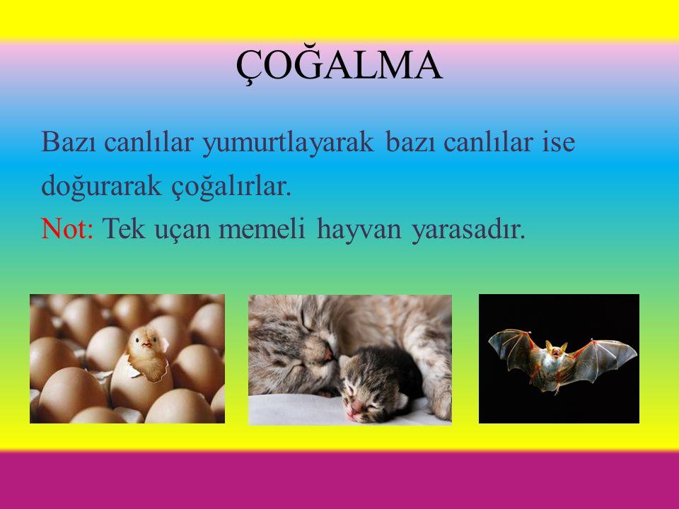 ÇOĞALMA Bazı canlılar yumurtlayarak bazı canlılar ise doğurarak çoğalırlar.