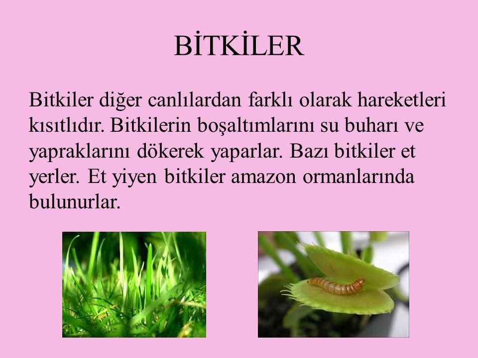 BİTKİLER Bitkiler diğer canlılardan farklı olarak hareketleri kısıtlıdır.
