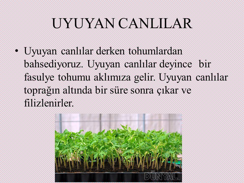 UYUYAN CANLILAR Uyuyan canlılar derken tohumlardan bahsediyoruz.