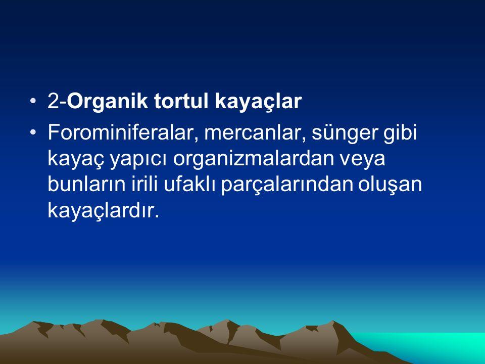2-Organik tortul kayaçlar Forominiferalar, mercanlar, sünger gibi kayaç yapıcı organizmalardan veya bunların irili ufaklı parçalarından oluşan kayaçla