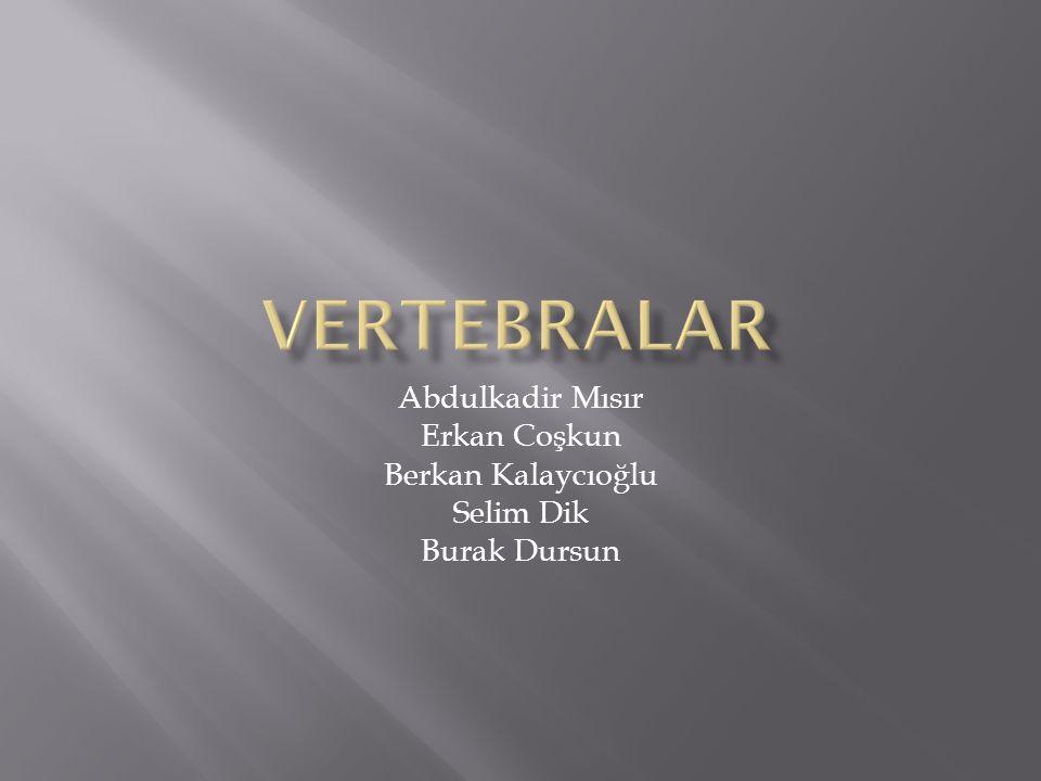 Abdulkadir Mısır Erkan Coşkun Berkan Kalaycıoğlu Selim Dik Burak Dursun