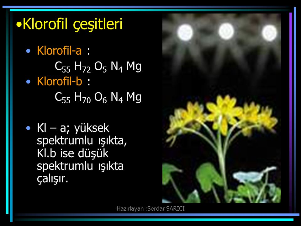 Klorofil çeşitleri Klorofil-a : C 55 H 72 O 5 N 4 Mg Klorofil-b : C 55 H 70 O 6 N 4 Mg Kl – a; yüksek spektrumlu ışıkta, Kl.b ise düşük spektrumlu ışıkta çalışır.
