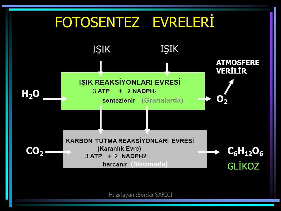 Hazırlayan :Serdar SARICI FOTOSENTEZ EVRELERİ IŞIK REAKSİYONLARI EVRESİ 3 ATP + 2 NADPH 2 sentezlenir (Granalarda) KARBON TUTMA REAKSİYONLARI EVRESİ (Karanlık Evre) 3 ATP + 2 NADPH2 harcanır (Stromada) IŞIK H2OH2O O2O2 ATMOSFERE VERİLİR CO 2 C 6 H 12 O 6 GLİKOZ