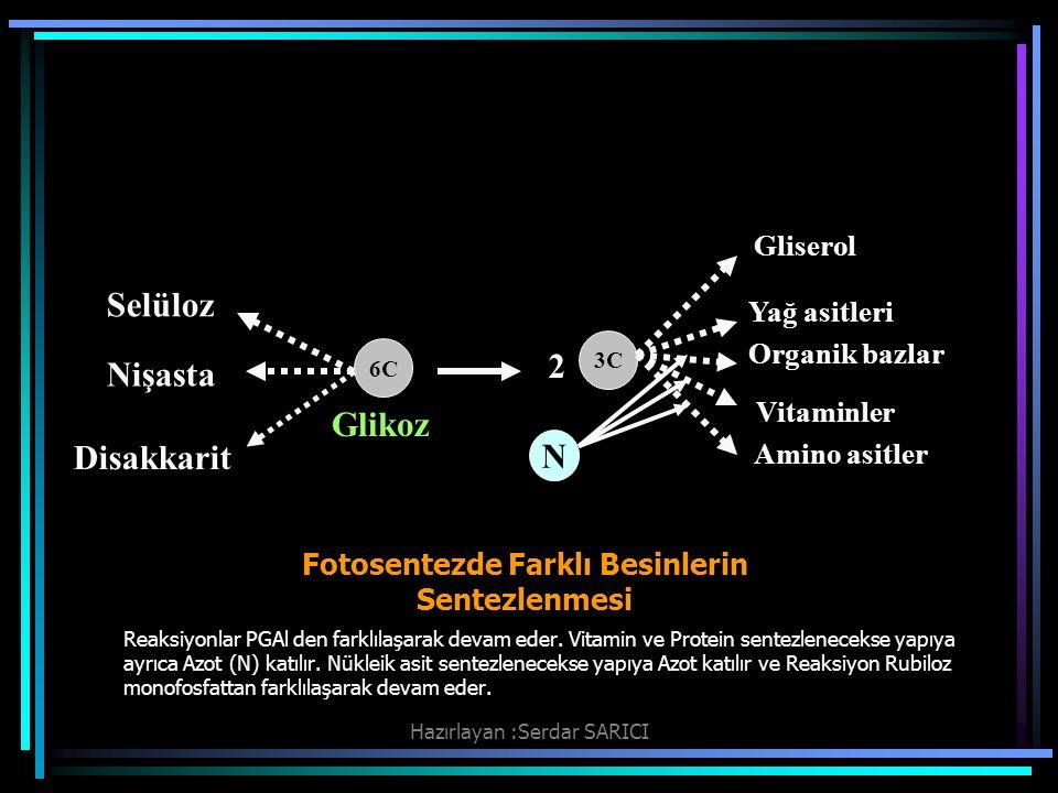 Fotosentezde Farklı Besinlerin Sentezlenmesi Reaksiyonlar PGAl den farklılaşarak devam eder.