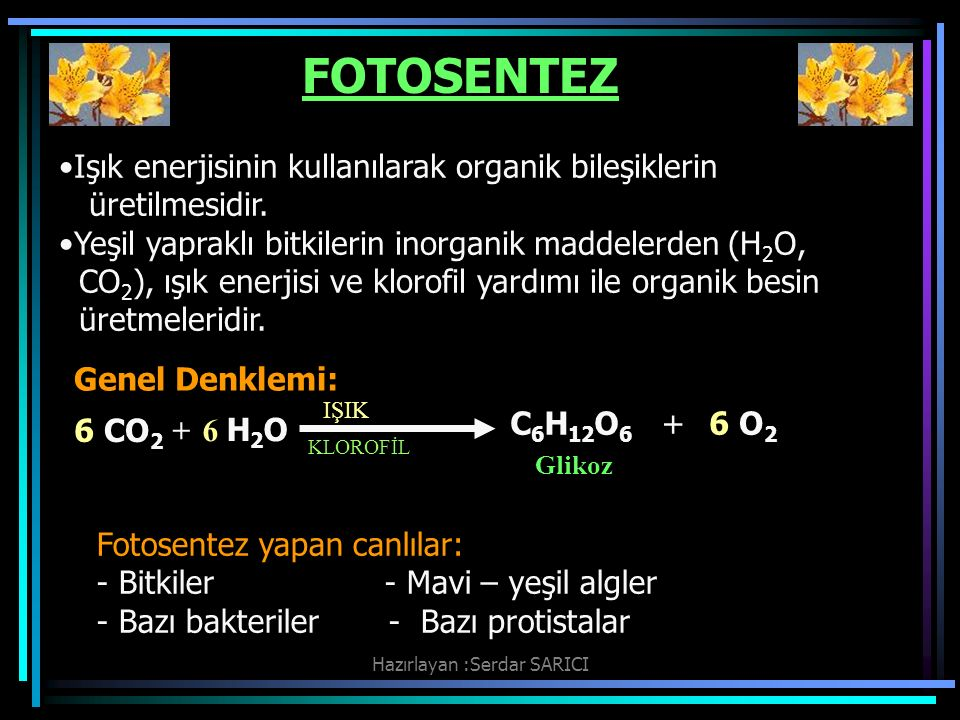 Hazırlayan :Serdar SARICI FOTOSENTEZ KLOROFİL IŞIK Glikoz 6 CO 2 + 6 H2O6 H2O Işık enerjisinin kullanılarak organik bileşiklerin üretilmesidir.