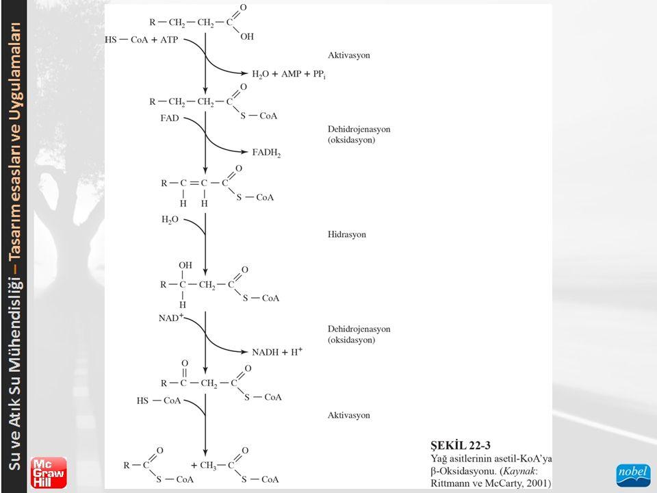 İKİNCİL ARITMADA TEMEL İŞLEMLERİN MİKROBİYOLOJİSİ  Denitrifikasyon  Mikrobiyoloji:  Stokiyometri:  Çoğalma Kinetikleri:  Çevresel Faktörler:  Fosfor Giderimi  Mikrobiyoloji:  Stokiyometri:  Çoğalma Kinetikleri:  Çevresel Faktörler: