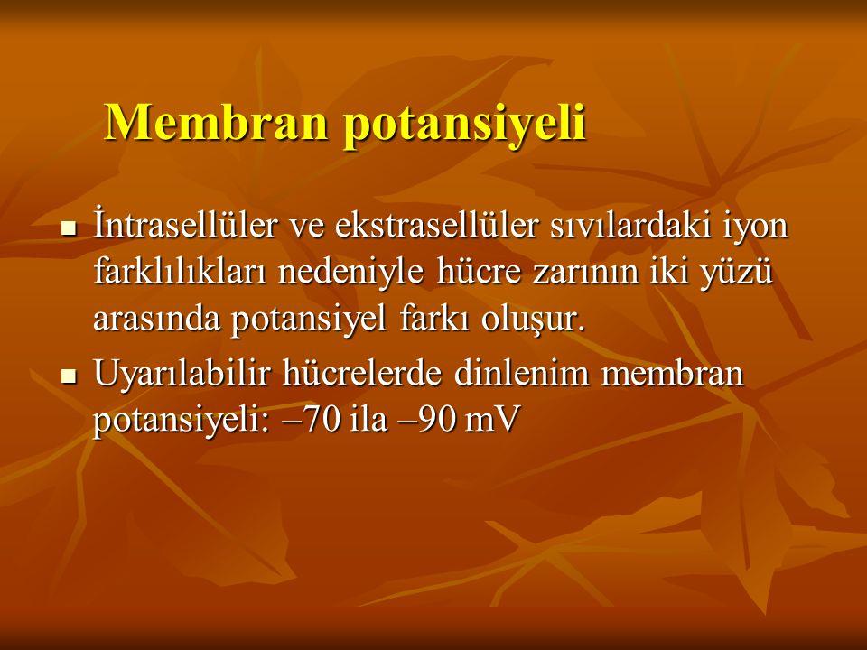 Membran potansiyeli Etkili faktörler: Na + - K + pompası Na + - K + pompası Membranın potasyuma geçirgenliğinin daha fazla olması Membranın potasyuma geçirgenliğinin daha fazla olması (Donnan etkisi) + + + + + + + + + + + + + + + + + + - - - - - - - - - - - - - - - - - - - - - -