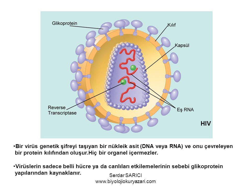 Bir virüs genetik şifreyi taşıyan bir nükleik asit (DNA veya RNA) ve onu çevreleyen bir protein kılıfından oluşur.Hiç bir organel içermezler. Virüsler
