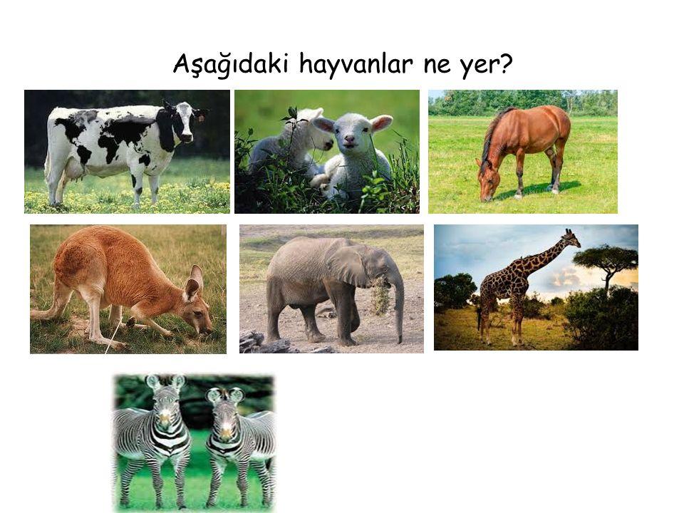 Aşağıdaki hayvanlar ne yer?