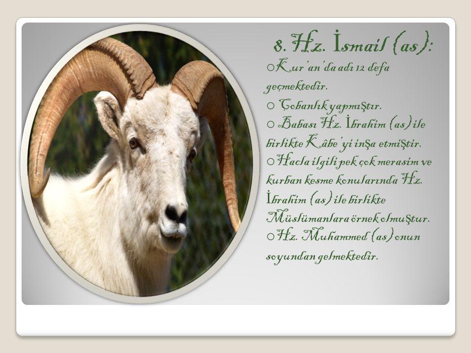 8.Hz. İ smail (as): o Kur'an'da adı 12 defa geçmektedir. o Çobanlık yapmı ş tır. o Babası Hz. İ brahim (as) ile birlikte Kâbe'yi in ş a etmi ş tir. o