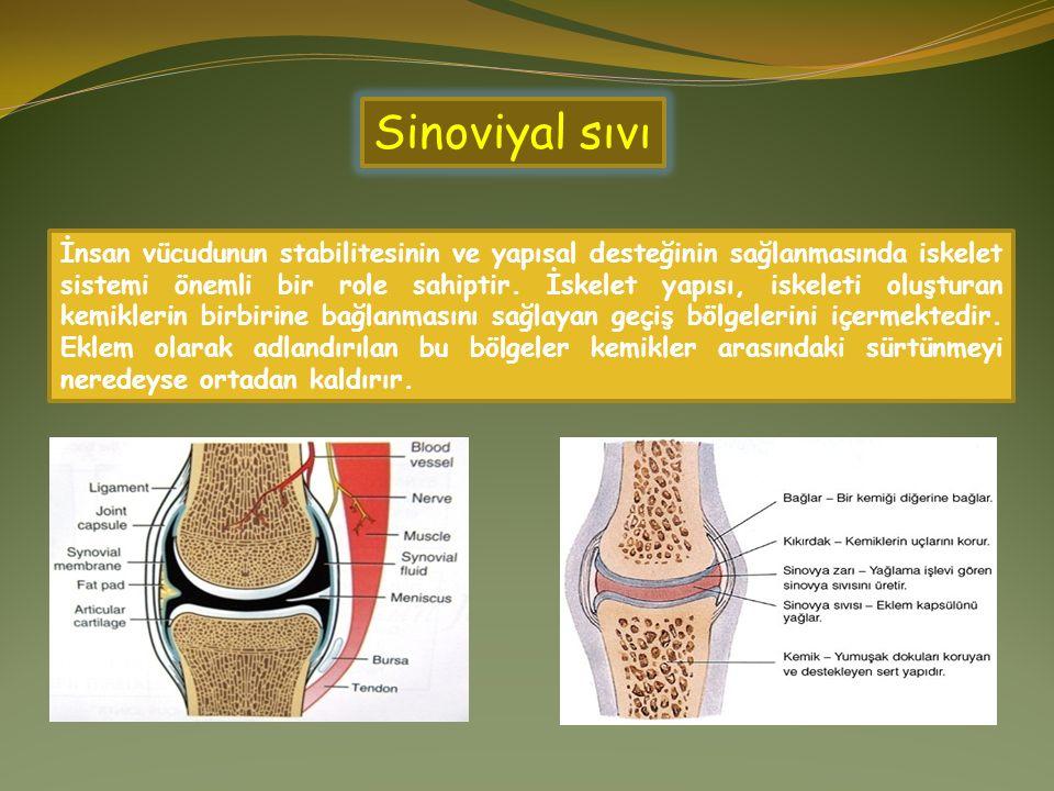 İnsan vücudunun stabilitesinin ve yapısal desteğinin sağlanmasında iskelet sistemi önemli bir role sahiptir. İskelet yapısı, iskeleti oluşturan kemikl