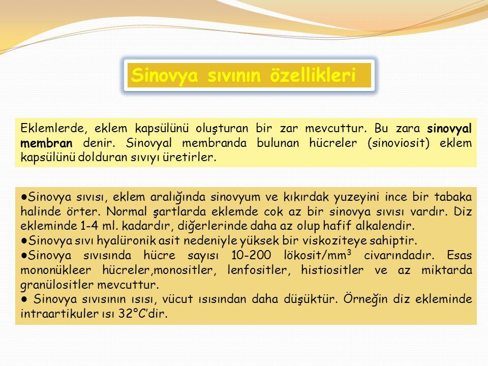 ● Sinovya sıvısı, eklem aralığında sinovyum ve kıkırdak yuzeyini ince bir tabaka halinde örter. Normal şartlarda eklemde cok az bir sinovya sıvısı var