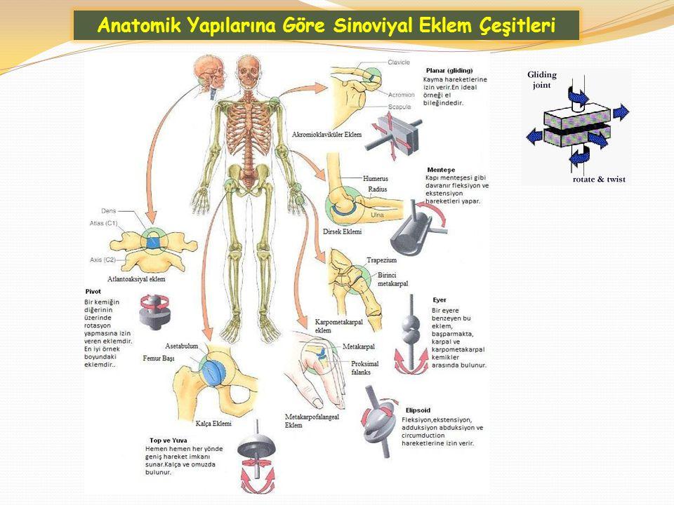 Anatomik Yapılarına Göre Sinoviyal Eklem Çeşitleri