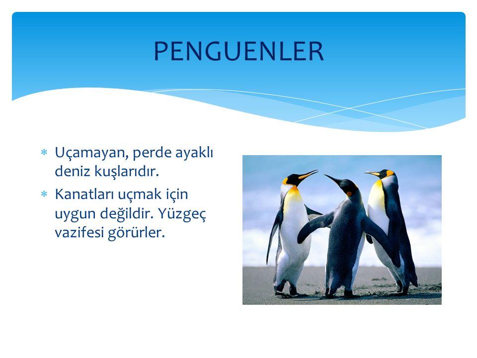 PENGUENLER  Uçamayan, perde ayaklı deniz kuşlarıdır.  Kanatları uçmak için uygun değildir. Yüzgeç vazifesi görürler.