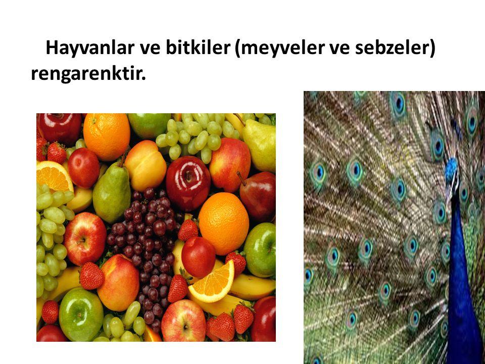Hayvanlar ve bitkiler (meyveler ve sebzeler) rengarenktir.