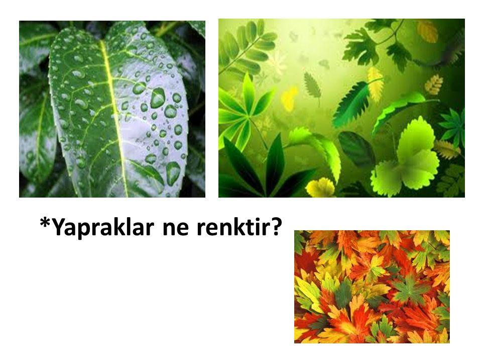 *Yapraklar ne renktir?