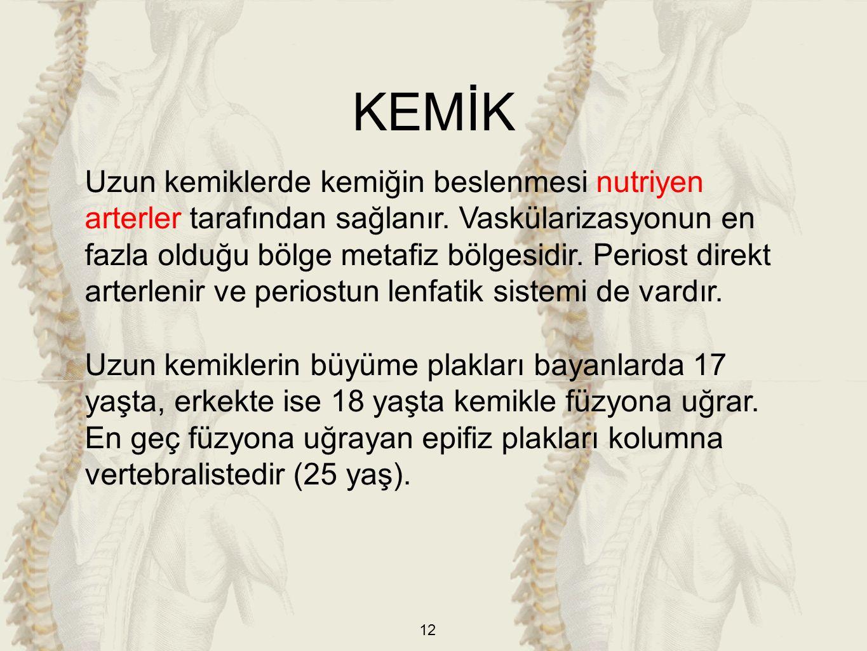12 Uzun kemiklerde kemiğin beslenmesi nutriyen arterler tarafından sağlanır. Vaskülarizasyonun en fazla olduğu bölge metafiz bölgesidir. Periost direk