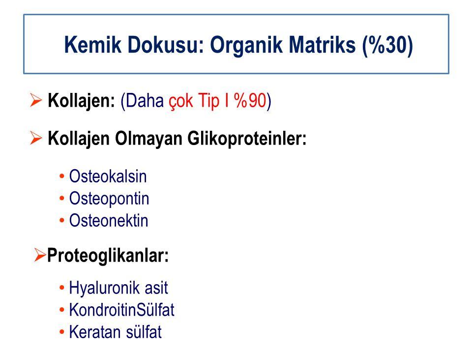 Kemik Dokusu: Organik Matriks (%30)  Kollajen: (Daha çok Tip I %90)  Kollajen Olmayan Glikoproteinler: Osteokalsin Osteopontin Osteonektin  Proteog