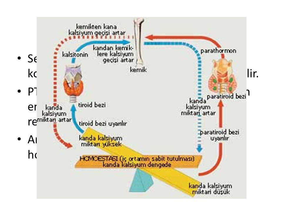 Kalsiyum Metabolizması Serum ve extraselüler alanda kalsiyum iyon konsantrasyonu düşerse PTH ile yanıt verilir. PTH 1,25(OH)D3 kalsiyumun barsaktan em