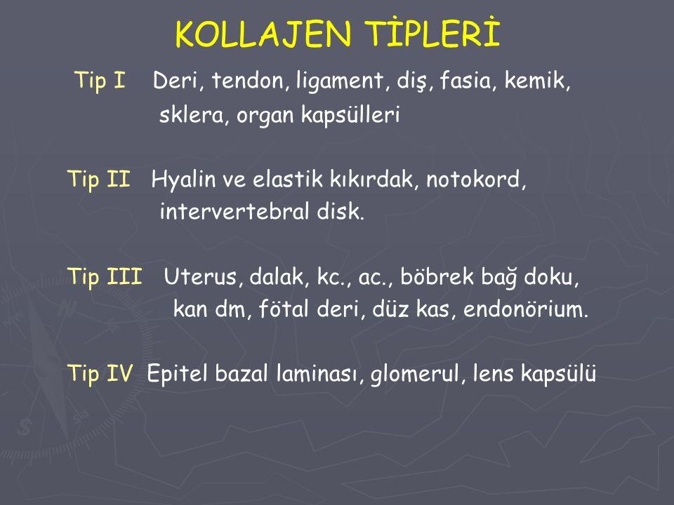 KOLLAJEN TİPLERİ Tip I Deri, tendon, ligament, diş, fasia, kemik, sklera, organ kapsülleri Tip II Hyalin ve elastik kıkırdak, notokord, intervertebral