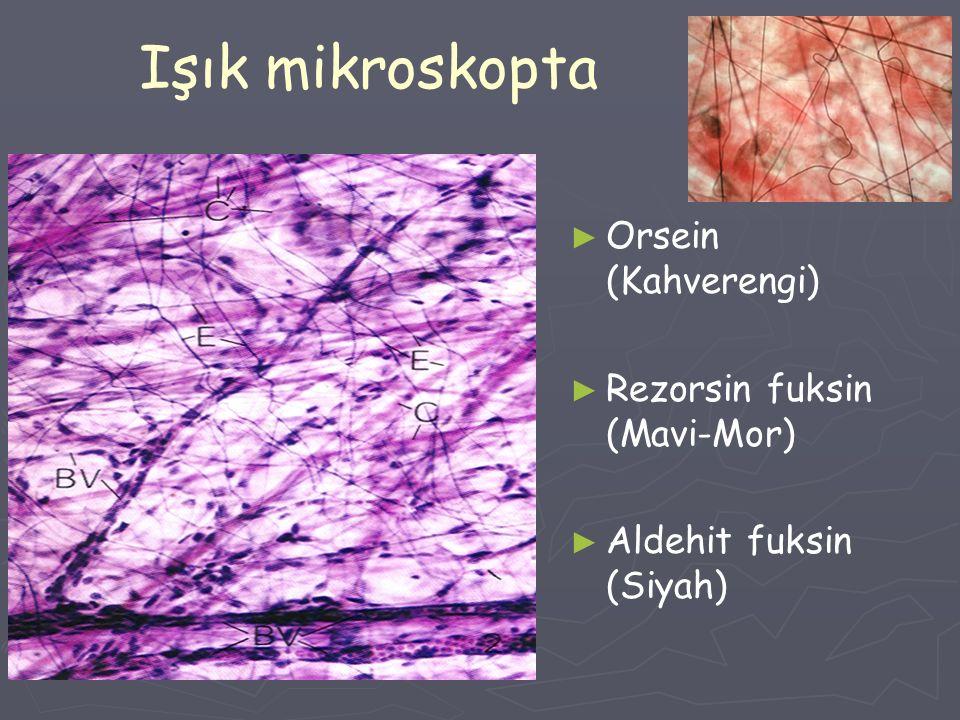 Işık mikroskopta ► Orsein (Kahverengi) ► Rezorsin fuksin (Mavi-Mor) ► Aldehit fuksin (Siyah)