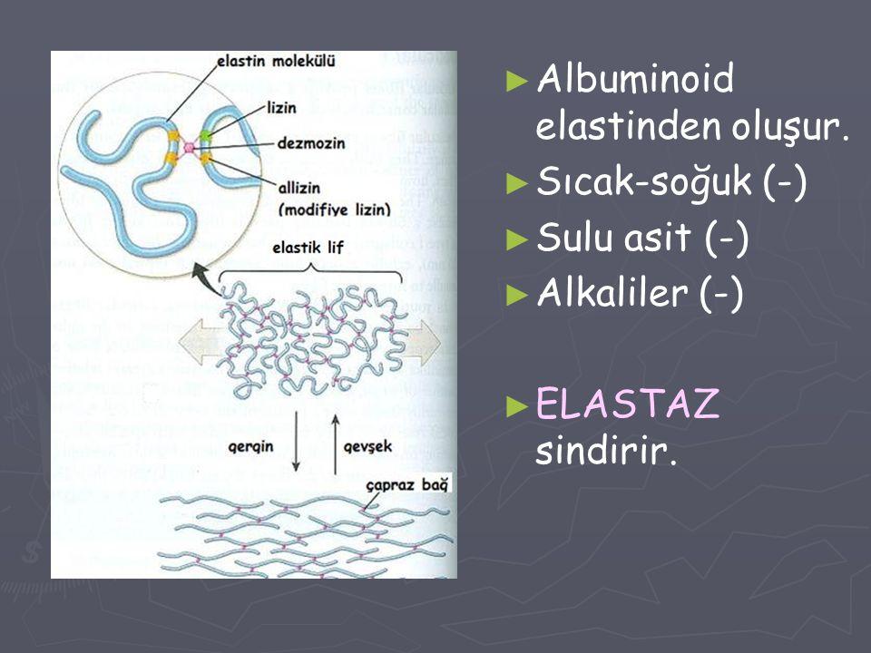 ► Albuminoid elastinden oluşur. ► Sıcak-soğuk (-) ► Sulu asit (-) ► Alkaliler (-) ► ELASTAZ sindirir.
