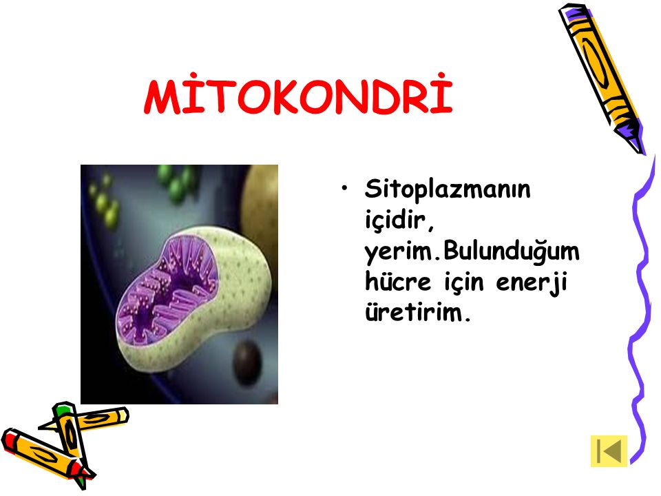 RİBOZOM Ribozom benim.Çok küçük bir organelim.Protein sentezlerim.